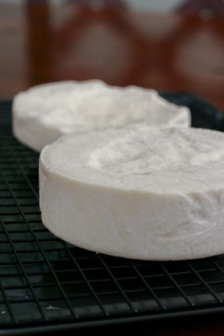 Cheesepalooza-20