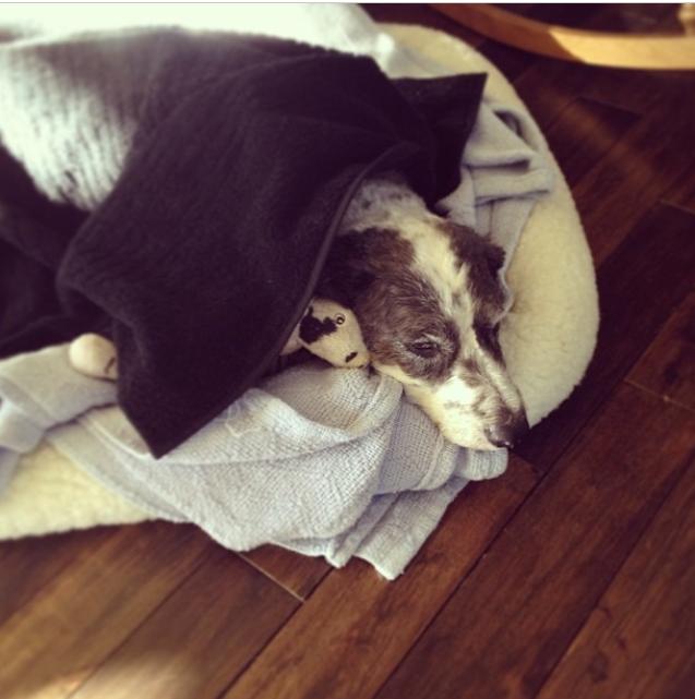 Chloe Resting